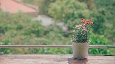 Free Pot Of Flowers Near Balcony Royalty Free Stock Photo - 111364685