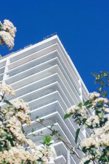 Free White Cherry Blossoms Beside High-rise Building Royalty Free Stock Photos - 111364718