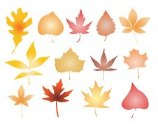 Free Vector Leaves Silhouette Set Stock Photography - 11148122