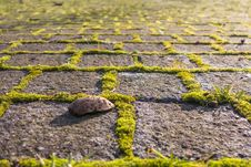 Free Grass, Field, Soil, Rock Stock Image - 111418791