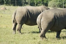 Free Terrestrial Animal, Grassland, Rhinoceros, Wildlife Royalty Free Stock Photo - 111419005
