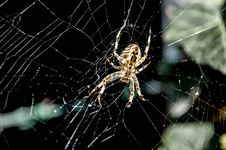 Free Spider Web, Spider, Arachnid, Invertebrate Stock Photo - 111419090