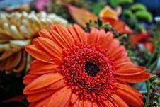 Free Flower, Gerbera, Flora, Petal Royalty Free Stock Photography - 111419457