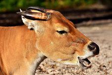 Free Wildlife, Fauna, Impala, Antelope Stock Image - 111420071