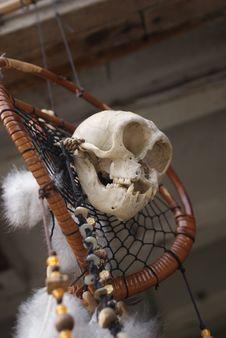 Free Skeleton, Skull, Bone Royalty Free Stock Images - 111420719