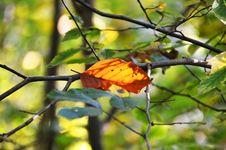 Free Leaf, Deciduous, Autumn, Branch Royalty Free Stock Image - 111421186