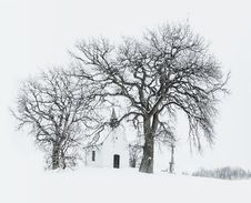 Free Bare Tree Near Building During Snow Time Photo Royalty Free Stock Photo - 111457405