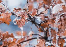 Free Tilt Shift Lens Of Brown Leaves Stock Image - 111457421