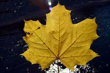 Free Leaf, Maple Leaf, Autumn, Plane Tree Family Royalty Free Stock Photography - 111482597