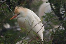 Free Bird, Beak, Fauna, Egret Stock Image - 111482971