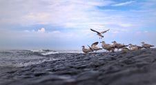 Free Sea, Sky, Shore, Seabird Stock Images - 111483314