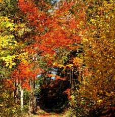 Free Nature, Autumn, Leaf, Temperate Broadleaf And Mixed Forest Stock Images - 111483704