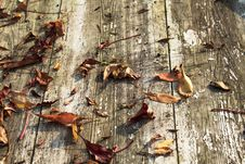 Free Leaf, Wood, Trunk, Tree Royalty Free Stock Images - 111483709