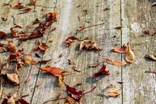 Free Leaf, Wood, Autumn, Trunk Royalty Free Stock Photography - 111483717