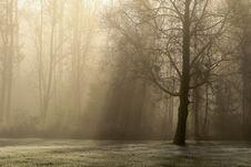 Free Fog, Mist, Morning, Tree Stock Image - 111483851