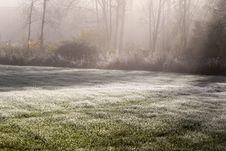 Free Fog, Mist, Morning, Tree Stock Image - 111483861