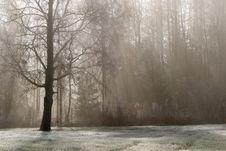 Free Tree, Fog, Winter, Freezing Stock Photo - 111483870