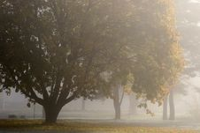 Free Tree, Fog, Morning, Mist Royalty Free Stock Photography - 111483887