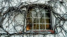 Free Tree, Branch, Winter, House Royalty Free Stock Photos - 111483918