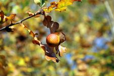 Free Branch, Leaf, Flora, Autumn Stock Photography - 111483922