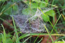 Free Spider Web, Invertebrate, Arachnid, Spider Royalty Free Stock Images - 111483959
