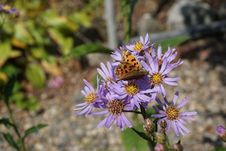 Free Flower, Flora, Aster, Plant Stock Image - 111484831