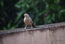 Free Bird, Fauna, Beak, Old World Flycatcher Stock Photos - 111484883