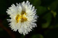 Free Flower, Flora, Wildflower, Aster Stock Photo - 111485300