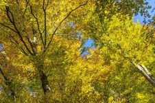 Free Nature, Tree, Yellow, Leaf Stock Image - 111485661