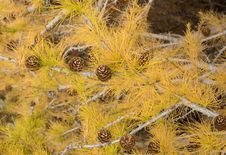 Free Vegetation, Ecosystem, Yellow, Flora Royalty Free Stock Image - 111485796