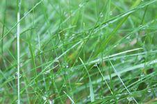Free Grass, Water, Vegetation, Moisture Stock Photo - 111485910