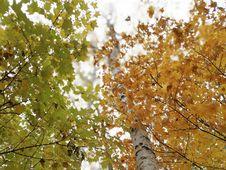 Free Tree, Leaf, Branch, Autumn Stock Image - 111485911