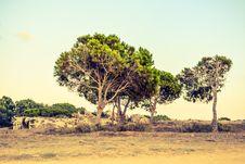 Free Tree, Vegetation, Ecosystem, Savanna Royalty Free Stock Image - 111487056