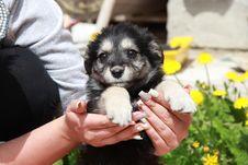 Free Dog, Dog Like Mammal, Dog Breed, Puppy Stock Images - 111487554