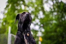 Free Dog, Black, Dog Breed, Mammal Royalty Free Stock Photos - 111488228