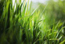 Free Green, Grass, Vegetation, Grass Family Royalty Free Stock Image - 111488256