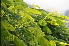 Free Vegetation, Leaf, Plant, Biome Stock Photos - 111488333