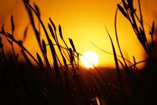 Free Sun, Yellow, Sky, Sunset Royalty Free Stock Photos - 111488408