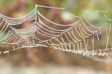 Free Spider Web, Water, Close Up, Moisture Stock Images - 111488534