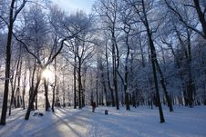 Free Winter, Snow, Sky, Tree Stock Photo - 111488610