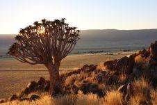 Free Ecosystem, Vegetation, Wilderness, Shrubland Stock Photos - 111488683