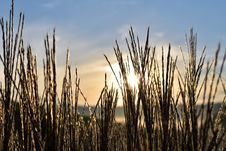 Free Sky, Grass, Grass Family, Phragmites Royalty Free Stock Photography - 111498067