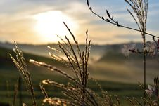 Free Sky, Grass, Morning, Grass Family Stock Images - 111498074
