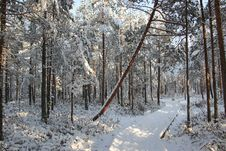 Free Snow Field Forest Stock Photo - 111545390