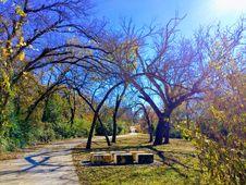 Free Empty Bench Near Tall Trees Stock Photos - 111545613