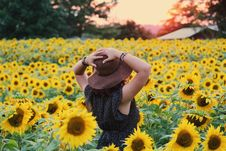 Free Photo Of Woman In Black Dress Standing On Sunflower Field Royalty Free Stock Photo - 111615105