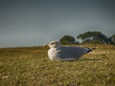 Free Bird Sitting On Grassy Ground Royalty Free Stock Photos - 111615208