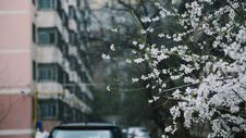Free Depth Of Photo Of White Petaled Flowers Stock Images - 111615284