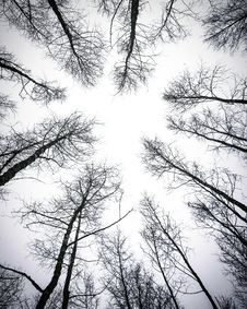 Free Leafless Trees Under White Sky Stock Photos - 111615323