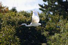 Free Bird, Fauna, Beak, Egret Royalty Free Stock Photos - 111642558